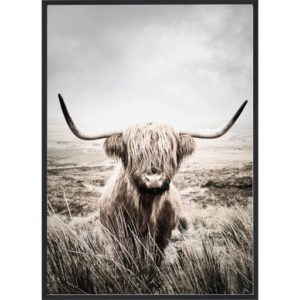 Poster 30x40 Nature Highland Cattle