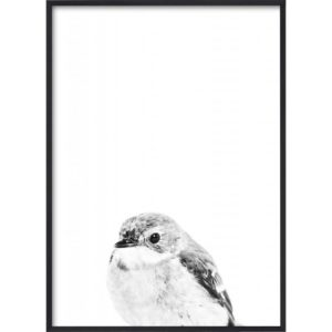 Poster_30x40_B&W_Little_Bird