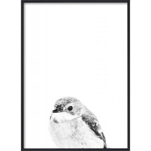Poster_30x40_B&W_Little_Bird