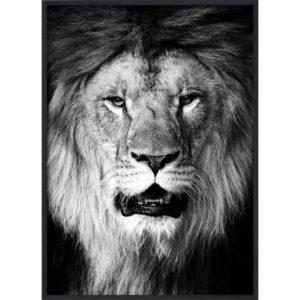Poster_30x40_B&W_Lion