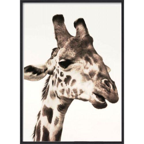 Poster_30x40_African_Giraffe_Head