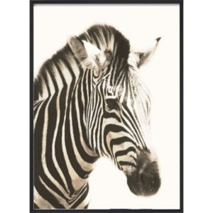Poster_30x40_African_Zebra_Head