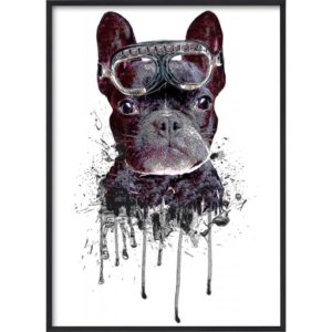 Poster-50x70-Blue-Dog