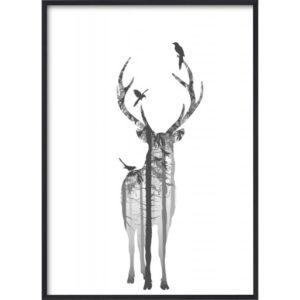 Poster-50x70-BW-Hjort