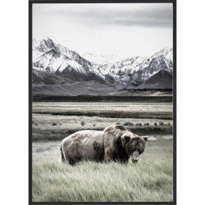 Poster 30x40 Nature Bear