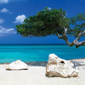 beach_tree-Poster-Beach