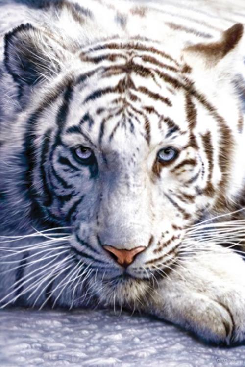 white_tiger-Poster-91.5x61