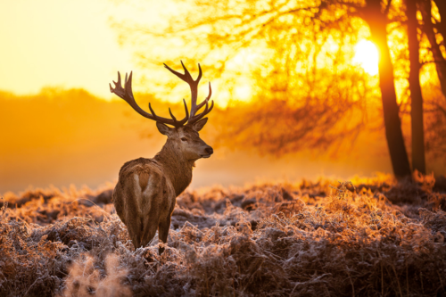cold_wildlife-Poster-91.5x61