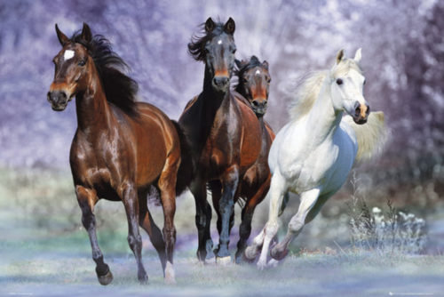 horses-Posters-91.5x61
