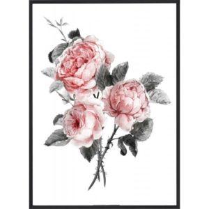 Poster 30x40 Pink Flower