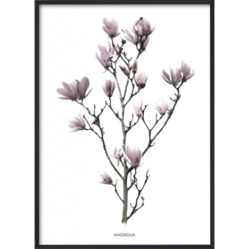 Poster 30x40 Pink Magnolia
