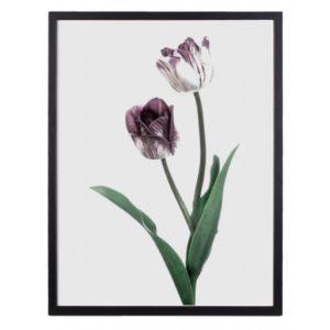 Poster 30x40 Purple Tulip No 10