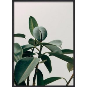 Poster-50x70-Green-Plant