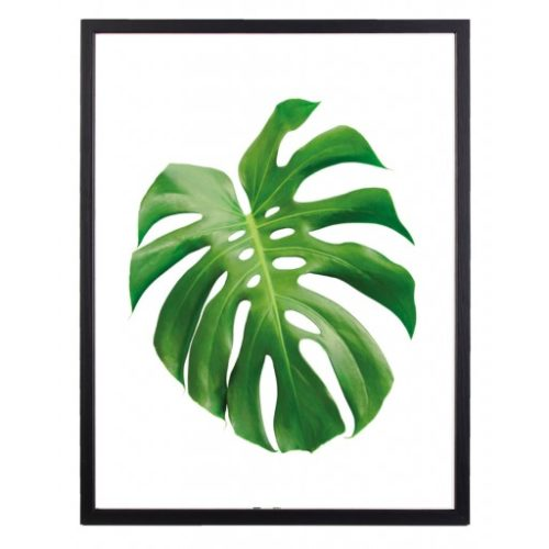 Poster 30x40 Green Monstrera