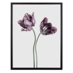 Poster_30x40_Purple_Tulip_No_11