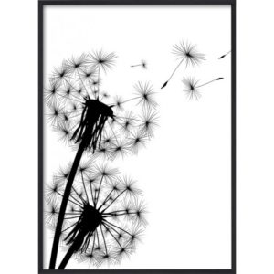 Poster 30x40 B&W Blowing Dandelion