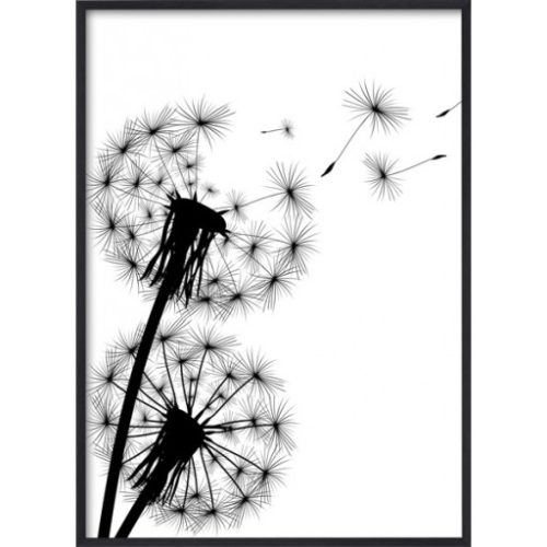 Poster 30x40 B&W Blowing Dandelion