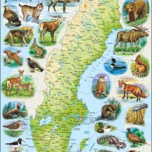 pussel-sverige-och-svenska-djur-svensk-text-71-delar